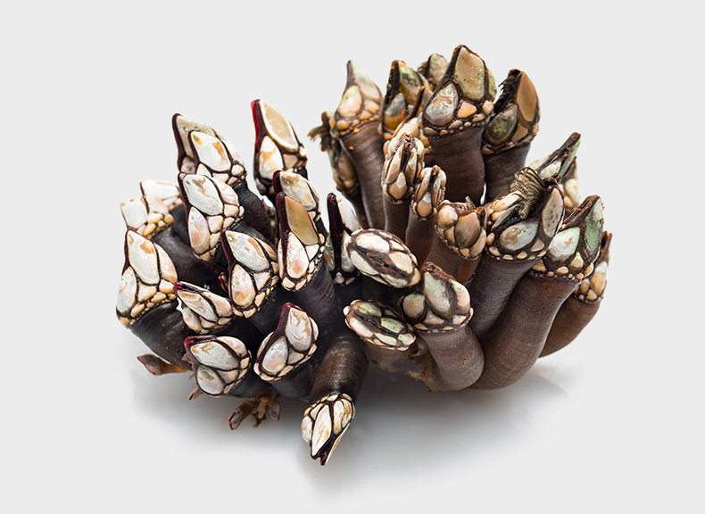 Pescheria Percebes